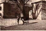Histoire et patrimoine de Malléon (Ariège)
