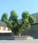 Histoire et patrimoine de Randens (Savoie)