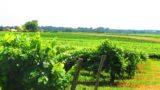 Histoire et patrimoine de Mauléon d'Armagnac (Gers)