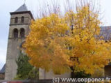 Histoire et patrimoine de Copponex (Haute-Savoie)